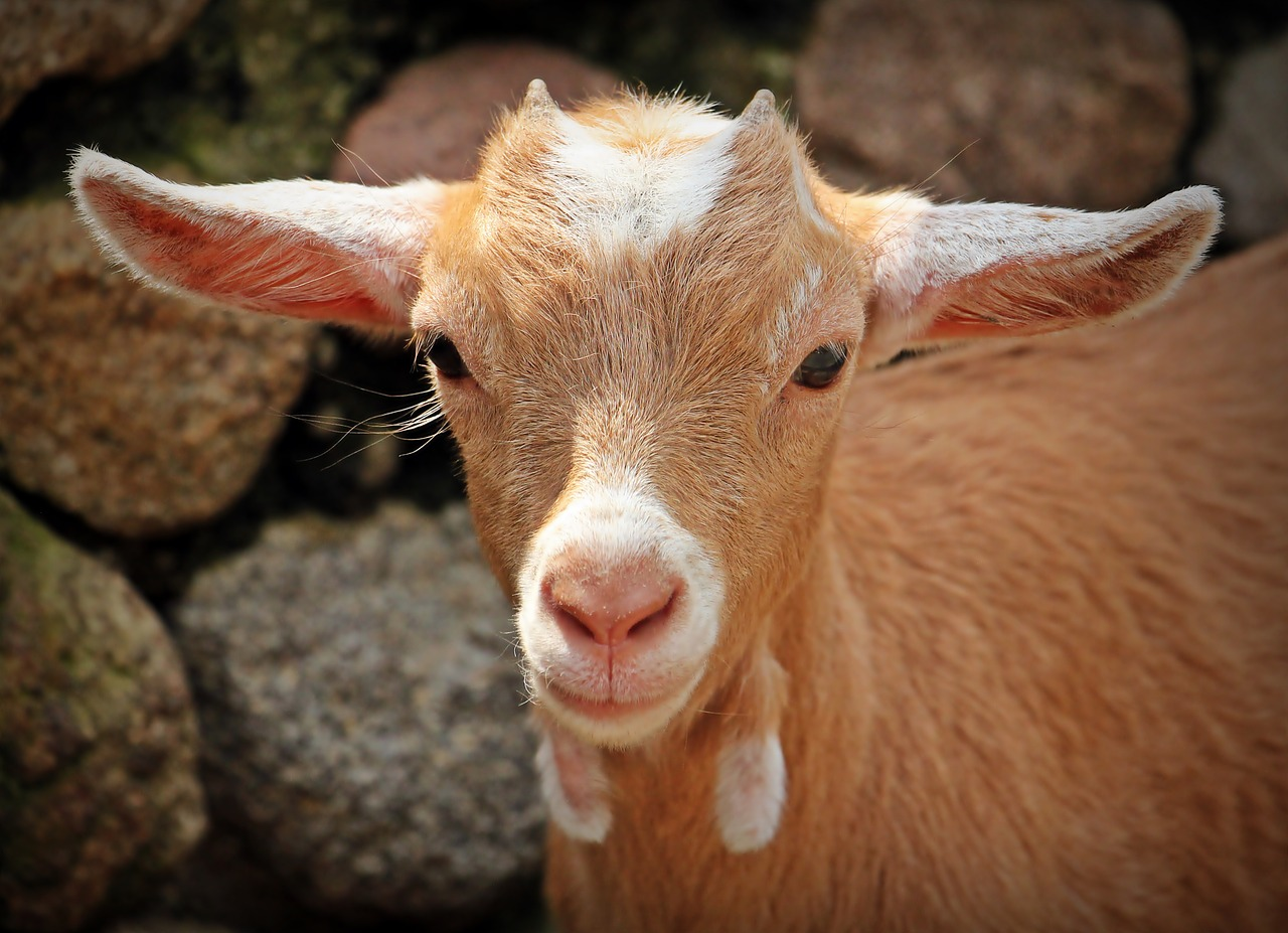 goat names